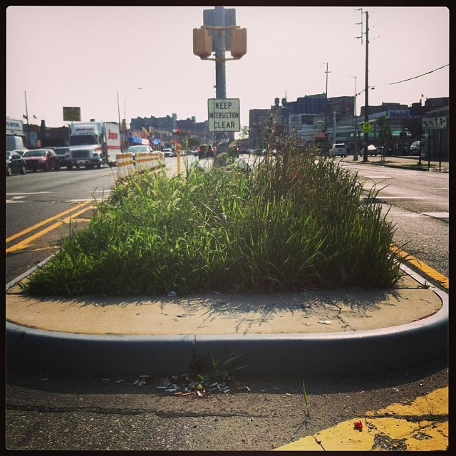 Median mix of wild grasses #spontaneousurbanplants #supsetariaviridis